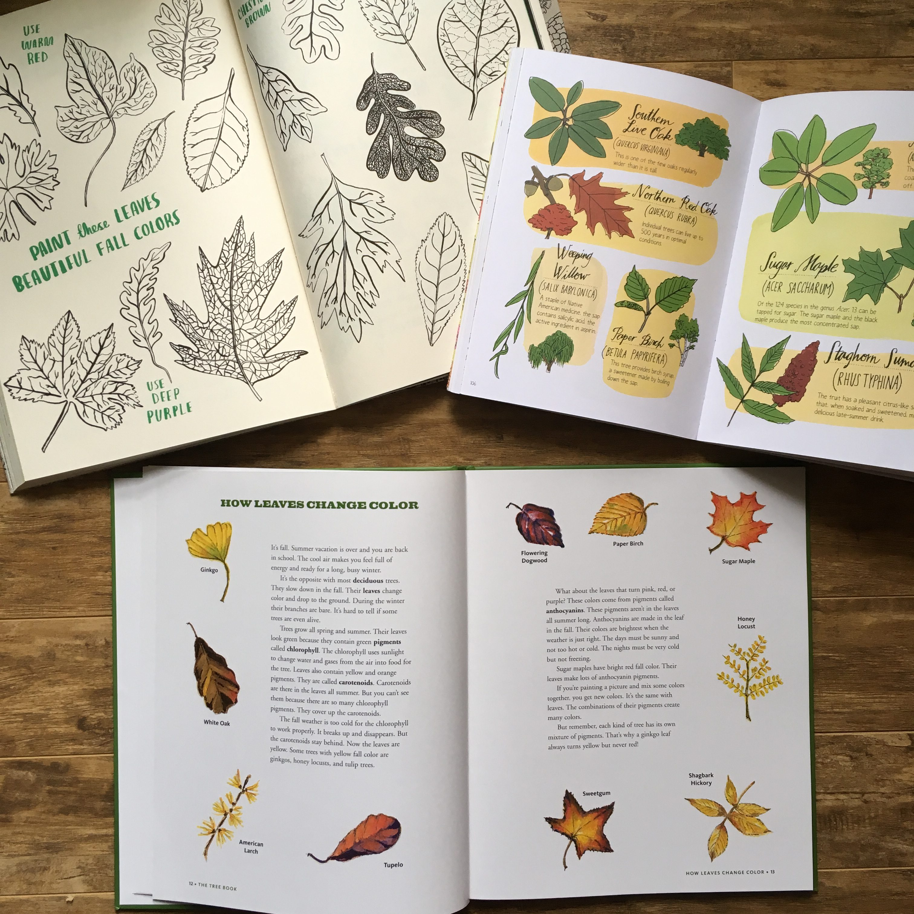 Exploring nature with kids for kids nature studies