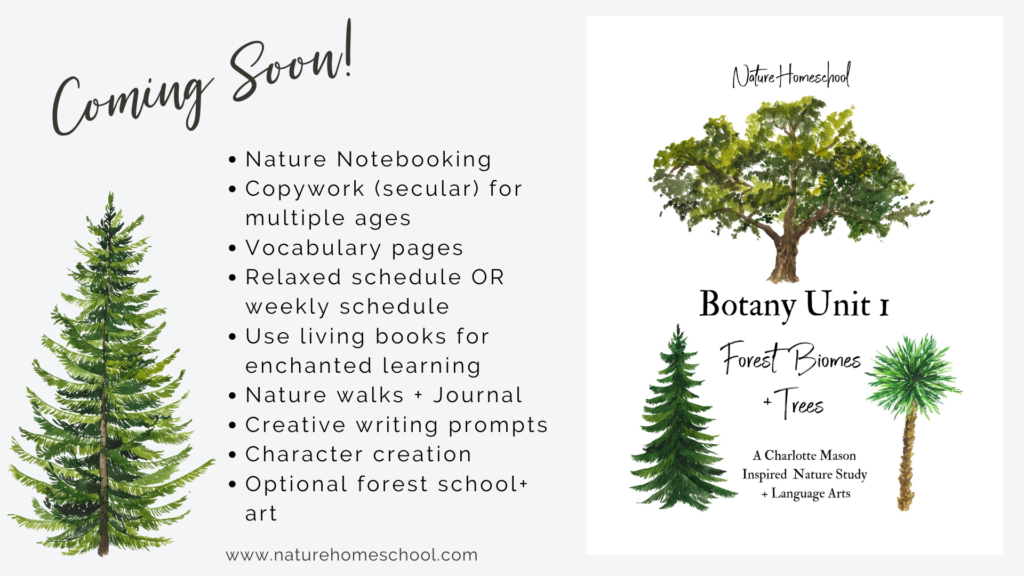 Kids Botany Science Unit Study- Trees and Forest