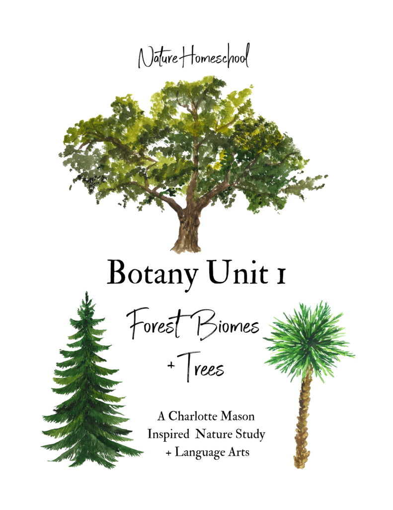 Forest Biome Nature Study